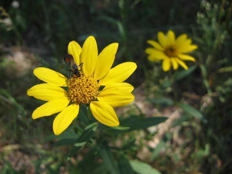 wildflower07