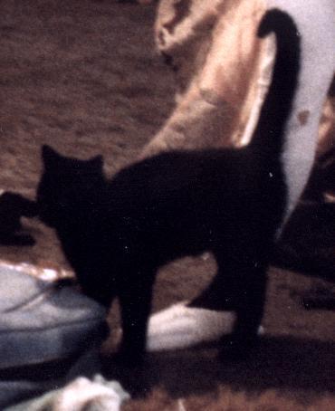 1982 Oozo Kitty