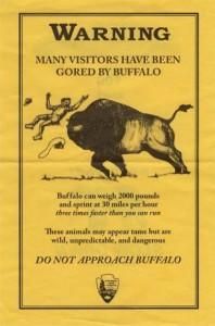 Buffalo Flyer